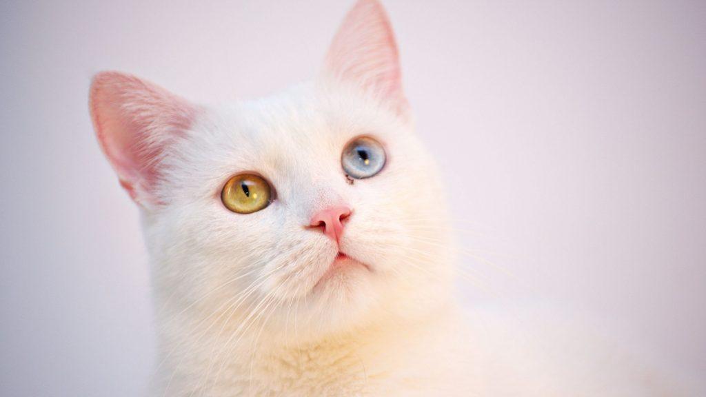 Best pet friendly alarm system UK